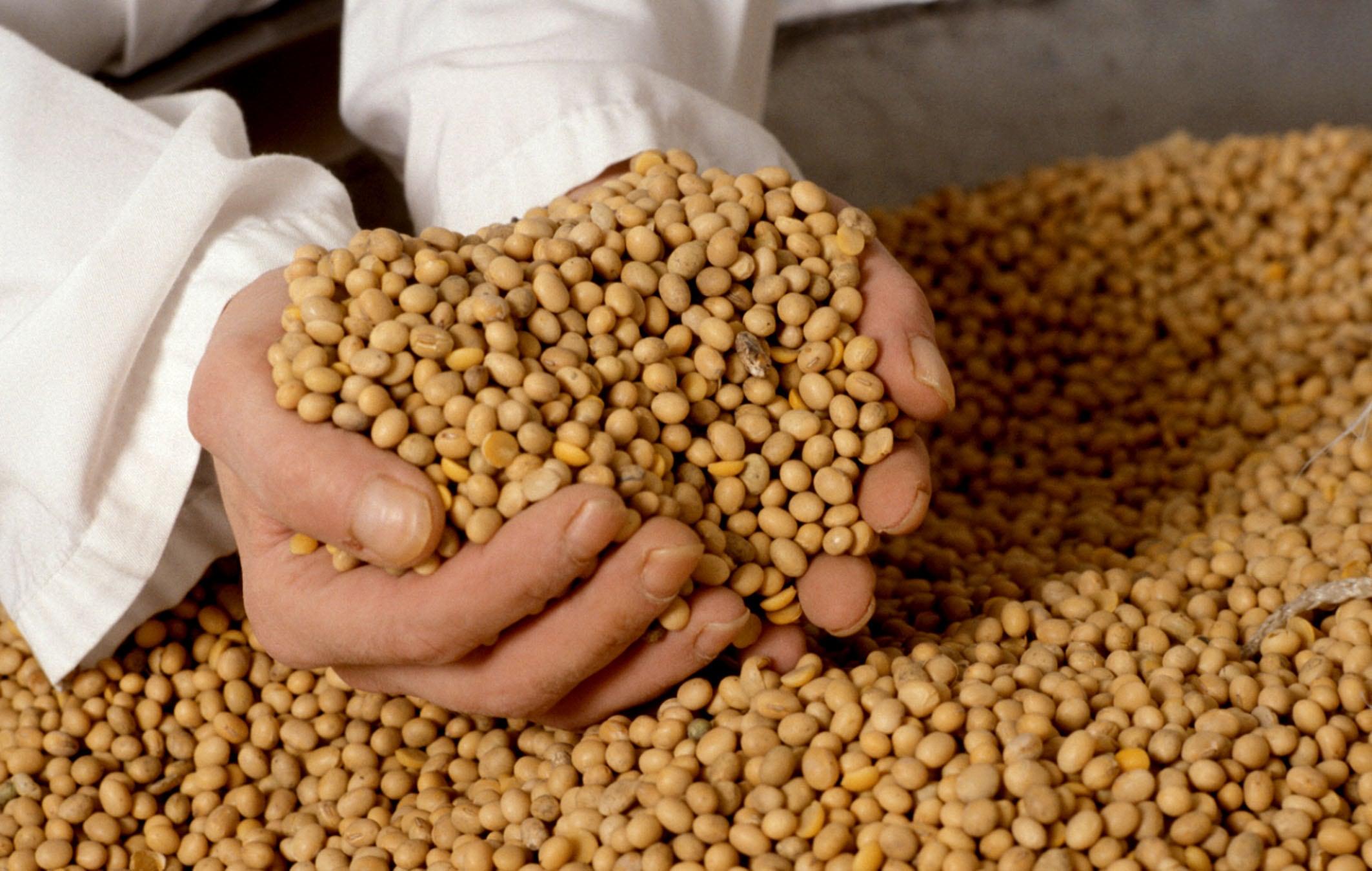 La soja está cerca de convertirse en el primer cultivo del mundo.