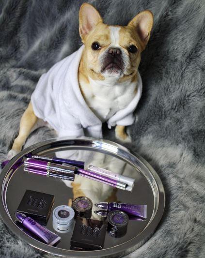 Petfluencers: las mascotas conquistan a las marcas