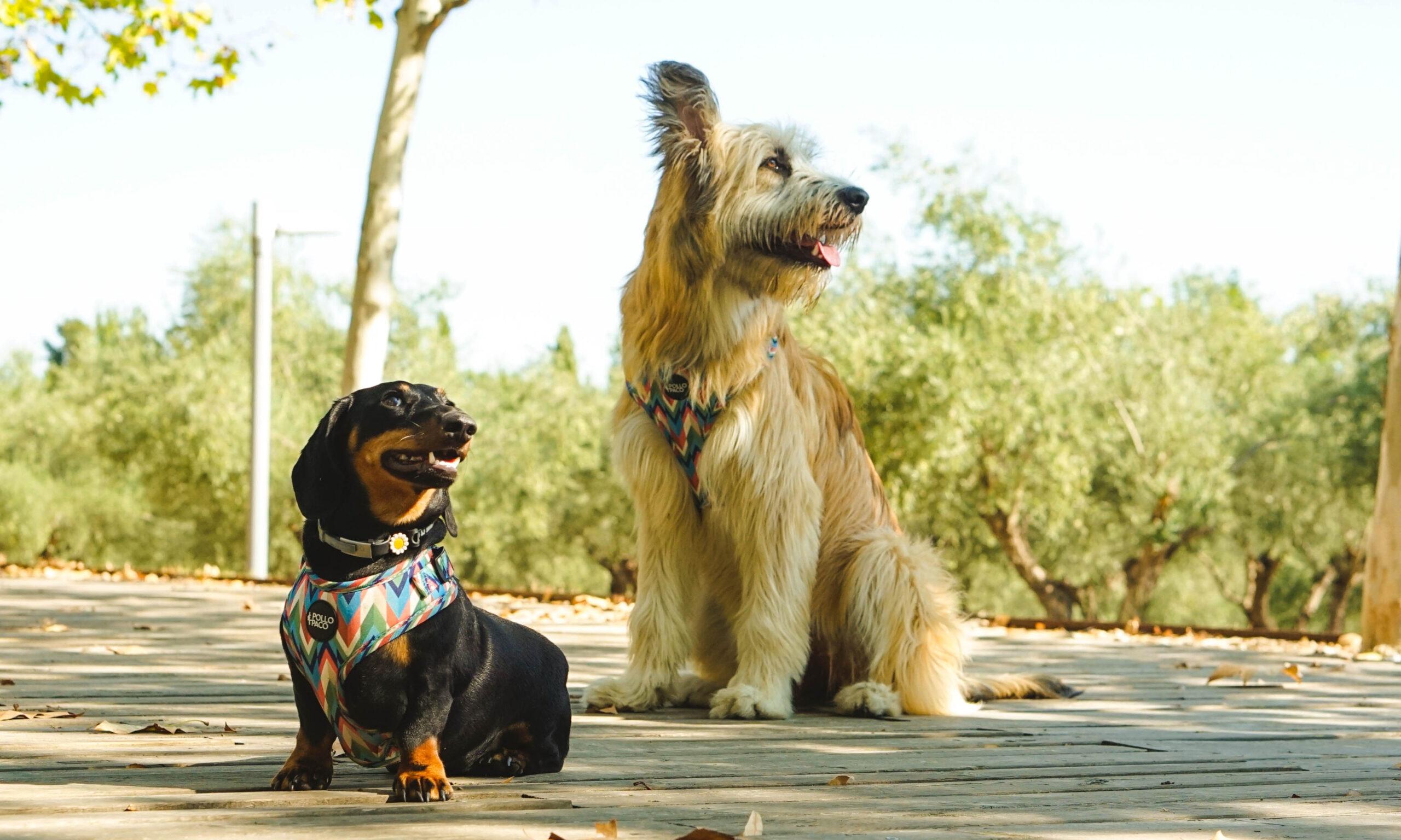 cómo relajar a un perro
